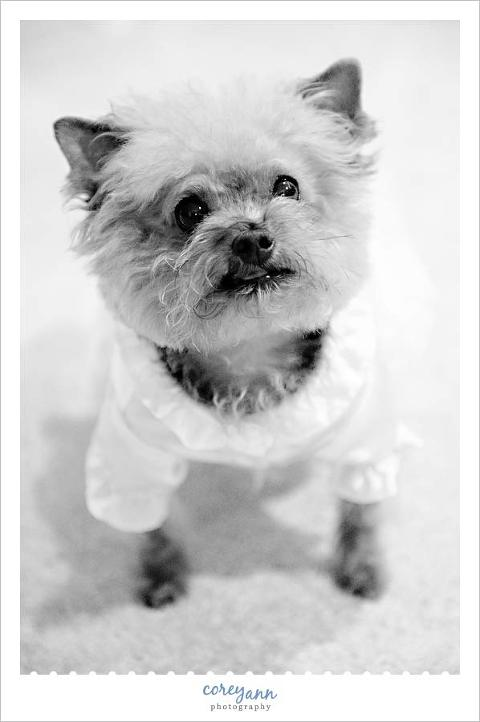 dog dressed up as a bride on a wedding day