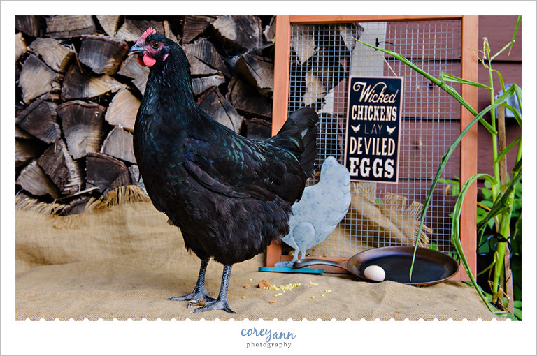 Chicken's First Egg Session